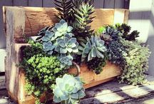 Pallet Gardening / Ideas, Designs and DIY Projects for Gardening in Pallets!