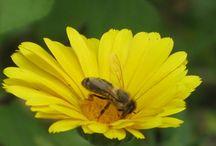Pszczoła jak przyjaciel