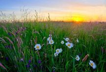 Wild Flower Meadows / Pictures and ideas to inspire our latest project - creating a wild flower meadow to surround the campsite.