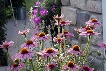 favorite landscape plants / by Nebraska Statewide Arboretum