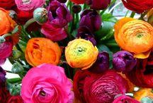 flori superbe