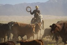 Don't Have A Cow! (or Buffalo for that matter) / Ever wonder just how cowboys got their name....
