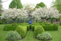 Garden / by Jeanne Ludwig