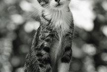 Animals :3 / Cute