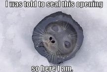 Seals / Seals are awesome! ...or simply, sealsome! :)