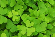 Lucky Me / A shamrock, a horseshoe, an old sock ... I'm fascinated by lucky charms and symbols. / by Michelle Mach