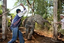 Animals & tourism
