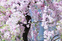 Gardens Flowers