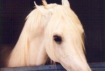 Horses / by Martha Robertson Henderson