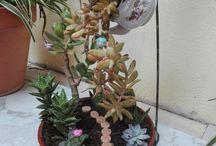 Mi primer Fairy garden