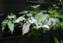 Garden: Containers / by Carrie Johnson