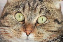 Cat / https://www.youtube.com/channel/UC1trxkjUq4xuYL0dFO8FTKw/videos
