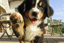 słodkie psy