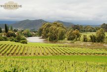 Weltevrede Wine Estate / Weltevrede is a family owned and managed wine estate in the Robertson wine valley, close to the town of Bonnievale, South Africa.   http://www.go2global.co.za/listing.php?id=2192&name=Weltevrede+Wine+Estate+