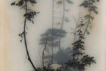 drzewce