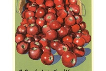 apples / by Paula McDaniel