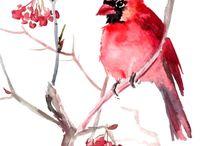 acuarelas pájaros