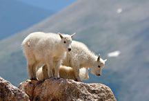 Wildlife around Big Sky