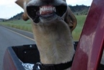 Canine Hilarity / We dare you not to laugh.
