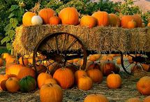 Autumn pumpkin patch