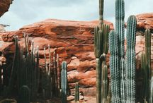 NATURE | Desert
