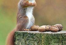 scoiattoli e topini