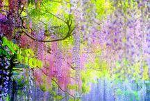 คาวาจิฟูจิการ์เด้น (Kawachi Fuji. Garden) อุโมงค์ดอกไม้ที่จะทำให้คุณเหมือนอยู่ในเทพนิยาย