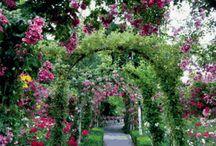 Цветочные арки