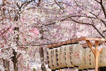 Tendance : Parterre de fleurs / On les cherche dans les villes, les envie sur les imprimés mode des défilés et les chérie chez soi : les fleurs procurent enthousiasme et apaisement. C'est pourquoi Balsan a souhaité les adopter dans ses collections. Avec Balsan, optez pour l'ensauvagement de la nature sur vos sols textiles !