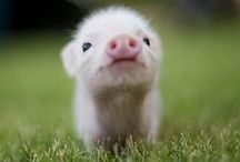 Baby Animals / Cute animals, they are so sweet