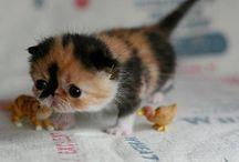 Cute Pets / by Courtney Wafler