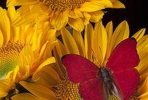 fiori dai colori delicati