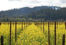 Spring in Sonoma County