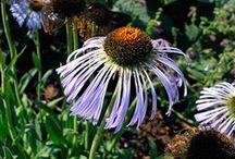 Plants I Need: Purple