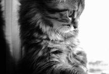 Cats / cicusok