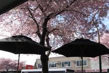 Greerton Village Spring