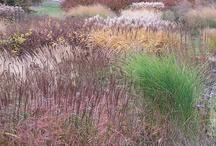 Garden Design: Perennial Grasses