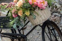 Old bike florals