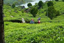 6 Days Kerala Tour package for Rs 13,500. / http://travelgowell.in/kerala-holidays/6-days-kerala-tour-packages/6-days-kerala-tour-package-1.html.6 Days Kerala Tour package for Rs 13,500.covering Munnar,Thekkady and Alappy houseboat.