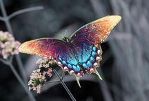 beautiful butterflies on flower