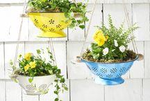 DIY Pflanzen: Hängend