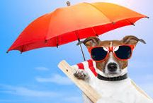 Vacation Time / Tips for Taking Your Pets on Vacation