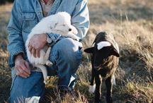 Dyr gjør alt bedre.