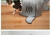 cat fun!