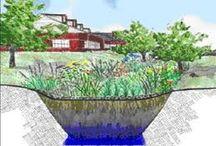 dešťová zahrada