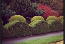 Topiary / Topiary and hedge cutting that we spot on our travels