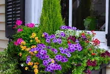 For the love of window boxes / They're small, bursting with color, and meant to be shared with those passing by...  / by Lori Kesten