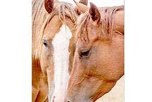 Posters Animals | Wellcoda