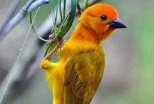 I'm a Birdwatcher
