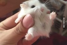 Hamsters are Great